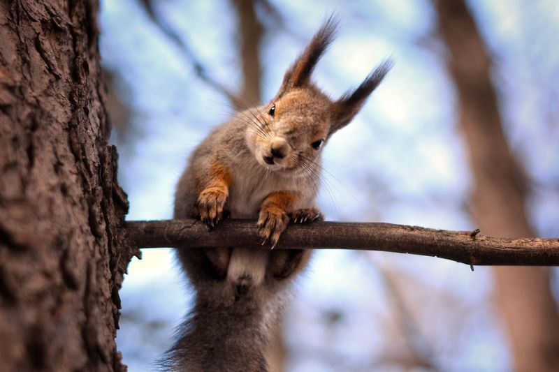 https://www.instagram.com/alyabev_ru/ Animal Animal Themes Animal Wildlife Animals In The Wild Tree One Animal Mammal Trunk Nature Day Tree Trunk Focus On Foreground Low Angle View Branch Plant No People Rodent Squirrel Vertebrate Outdoors
