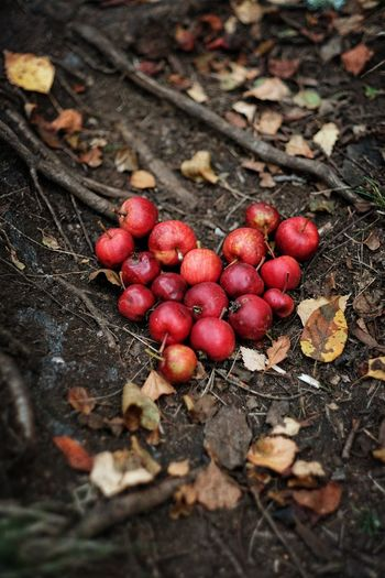Apples in the woods Autumn Dogwalk Eyeem Nature EyeEm Nature Lover Eyeem Sweden Fruit FUJIFILM X-T2 Fujifilm_xseries Heart Heart Shaped  Hjärta Hundpromenaden Höst Kungshamn Nature Red Skogen Sverige Sweden Vildäpplen Wild Apples Wood X-t2 XF56mmAPD AppleN