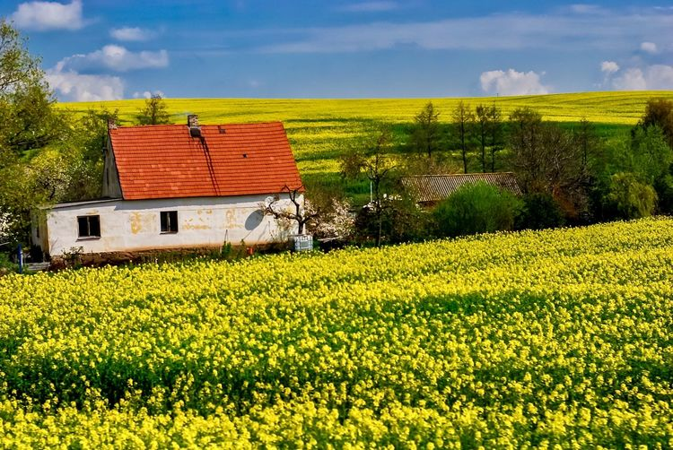 Scenic view of field against yellow sky