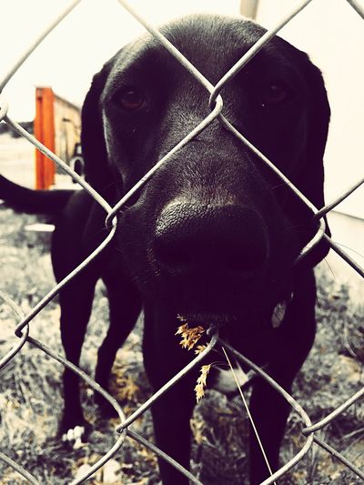 Domestic Animals Mammal One Animal Day Animal Themes Outdoors Dog No People Pets Close-up