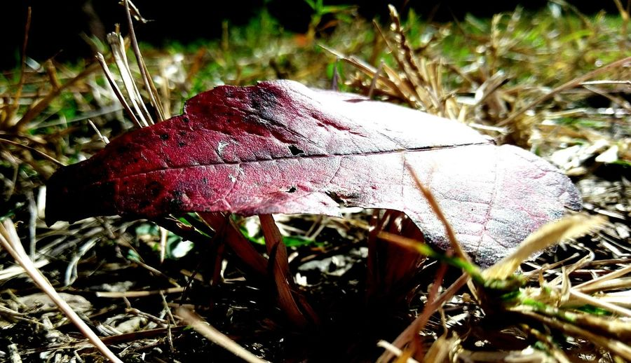 U4 Fallen Leaf Close-up Just Below The Surface Leaf Nature Fall In Love With Fall No People Landscape Red Leaf first eyeem photo Landscape Travel EyeEm Diversity Art Is Everywhere The Secret Spaces Lost In The Landscape EyeEm Ready