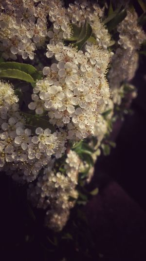 Close-up Nature No People Day Outdoors Plant Growth Fragility Beauty In Nature Sun Grass Nature Beauty In Nature Growth Plant Blooming Petal Pollen Flower White Color Freshness Sunlight