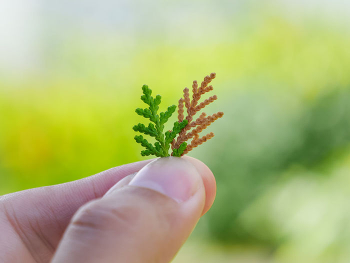 Close-up of hand holding small plant