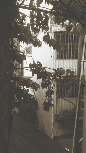 Row House Row House Fire Tree Trees Alley Alleyway Alleyways Architecture Building Building Exterior Built Structure Cage Ceiling Day Hanging Indoors  Nature No People Plant Row House Rooftops Row Houses Tree Window Window View Windows