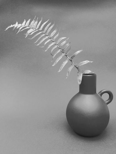 Close-up of plant on table against white background