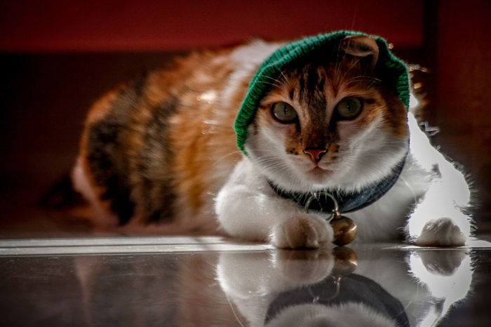 VANAJA Kitten Cat Lovers Cats Of EyeEm Hijab EyeEm Selects Vanaja Portrait Photography Portrait Of Cat Pets Portrait Looking At Camera Close-up Cat