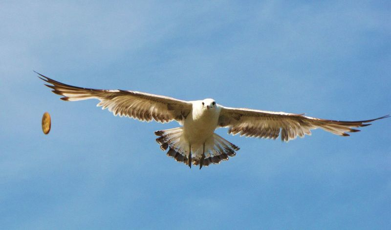 Spontaneous Moments Nature Photography SEAGULL IN FLIGHT Seagull, Birds, Flight, Fly, Hover, Feathers, Wings, Beaks, Span, Seagulls Flying Over Me