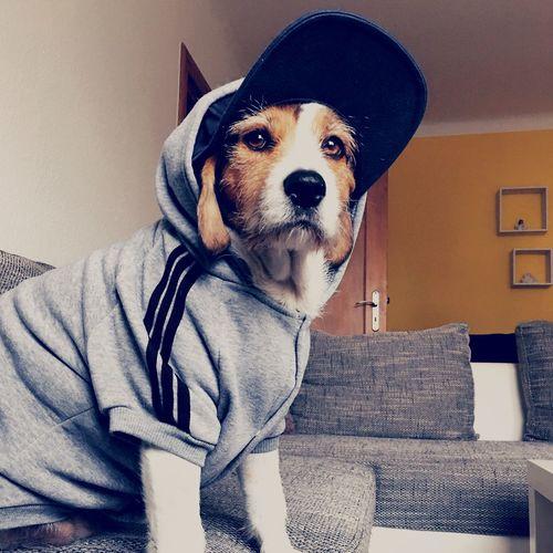 Adidog EyeEm Best Shots EyeEmNewHere Dogs DogLove Beagle Beaglemix Nurselife Nele Dogsarefamily Adidog Dog Pets One Animal Domestic Animals Animal Themes Sitting Mammal EyeEm Ready