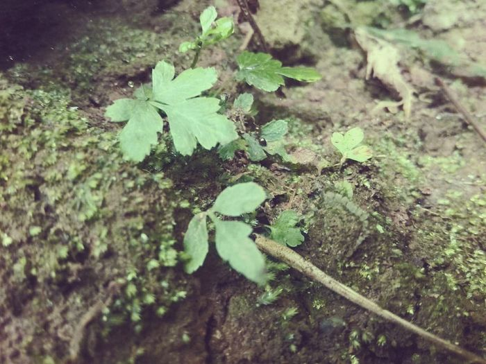 Leaf Nature Growth Plant No People Close-up High Angle View Outdoors Green Color Day Beauty In Nature Fragility Freshness Water