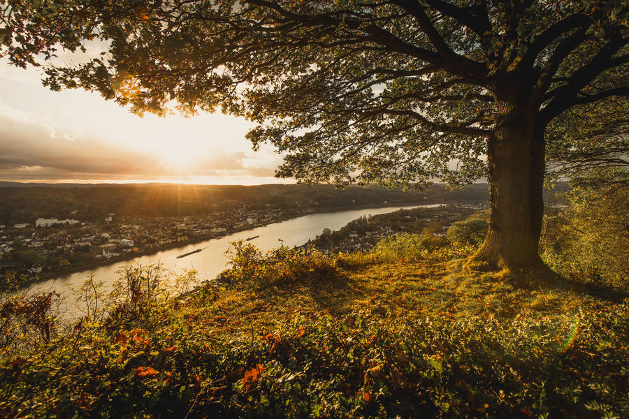 River Rhine at sunset: Tree with Autumn colours Autumn Autumn Colors Golden Remagen Rhein Rheinland-Pfalz  Rhine Beauty In Nature Erpel Fluss Germany Golden Hour Nature No People Outdoors Rhine River Rhineland-palatinate Scenics Sunbeam Sunlight Tranquil Scene Tree Water