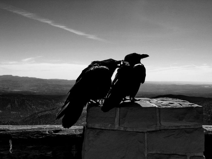 Ravens Perching On Surrounding Wall Against Sky