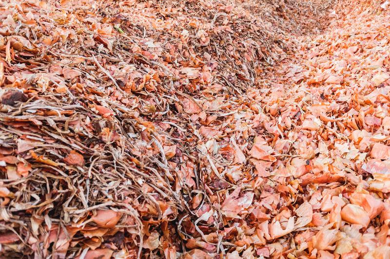 Full frame shot of dry autumn leaves