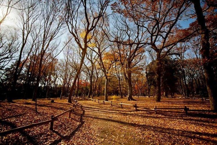Inokashira Park Tokyo Autumn Inokashira Park.Tokyo First Eyeem Photo