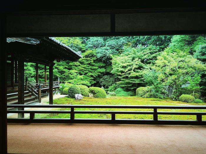 随心院 山科 京都 Kyoto Kyotojapan Green Color 3XSPUnity Enjoying Life Hello World Kyoto Garden Beauty In Nature Travel Destinations Relaxing Relaxation Japanese Garden Kyototravel Kyoto, Japan Lifestyles Kyoto Temple