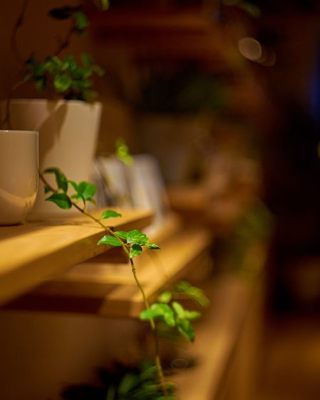 No People Plant Focus On Foreground Close-up Green Color Nature Indoors  Freshness Night Leaf Cups And Mugs Calm Calmness Calm And Quiet Light And Shadow Light And Dark Moody Mood Of The Day Day