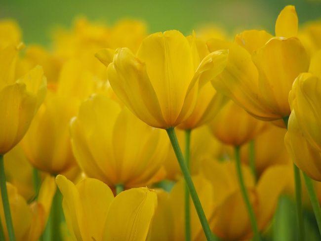 Flowerporn Beauty In Nature Nature Yellow Nature_collection Nature Flowers_collection Flower Flowers Yellow Flower