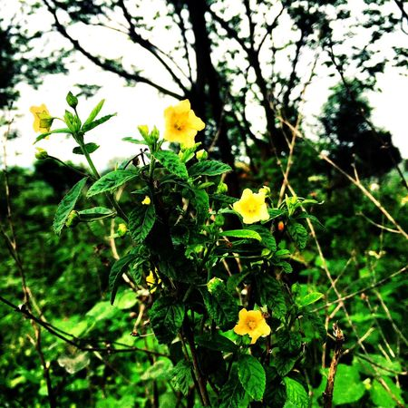 Wild Life Photograph Yellow Flowers Chinese Festivals Qingming Day Missing The Old Family People