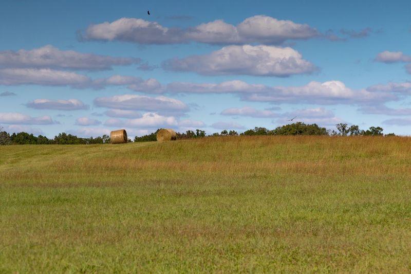 Field Grass Sky
