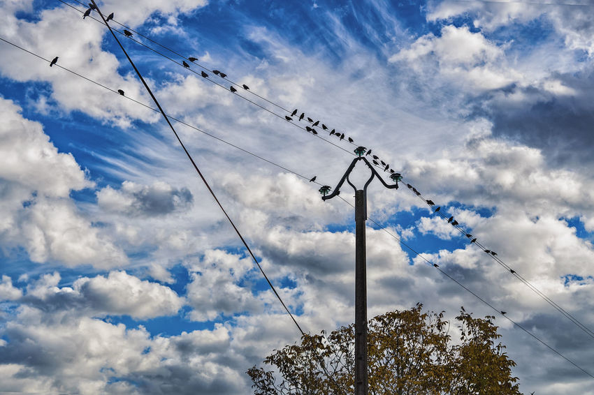 Cloud - Sky Sky Low Angle View Nature Technology Connection Communication Day No People Cable Telecommunications Equipment Antenna - Aerial Electricity  Outdoors Vertebrate Bird Television Aerial Animal Tree Animal Themes Telephone Line Power Supply Flock Of Birds