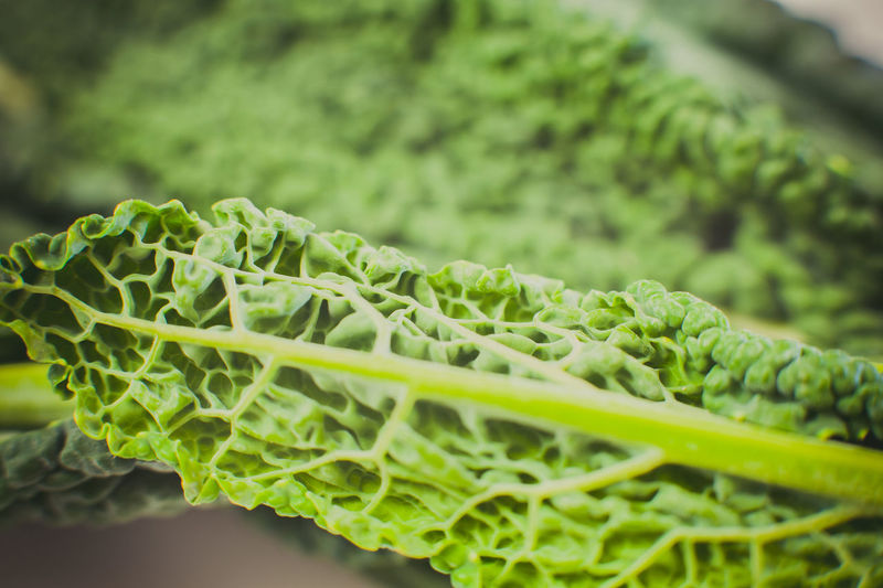 Green Kale vegetable raw leaf detail Cabbage Close-up Detail Food Freshness Green Green Color Green Color Kale Leaf Macro No People Raw Vegetable