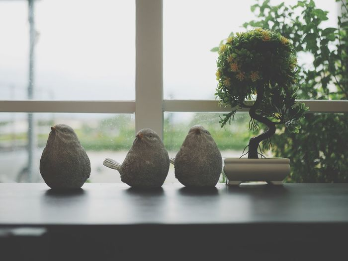 View of potted plants on window sill