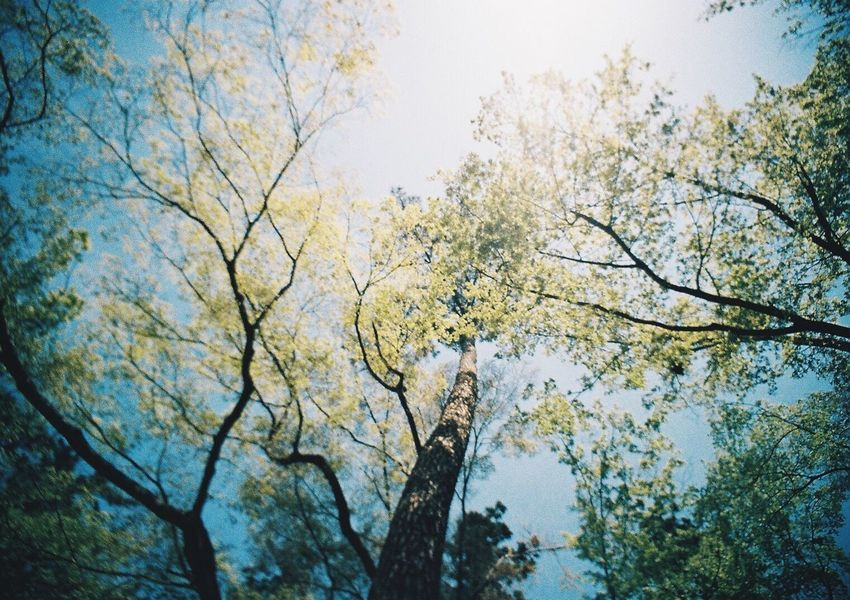 Tree Nature Growth Environment Branch No People Outdoors Beauty In Nature Day Sky Green Japan Japan Photography Forest Wood Film Photography Lomo Lomography Negative LC-Wide Tokyo Sleepy Dreamy Fantasy
