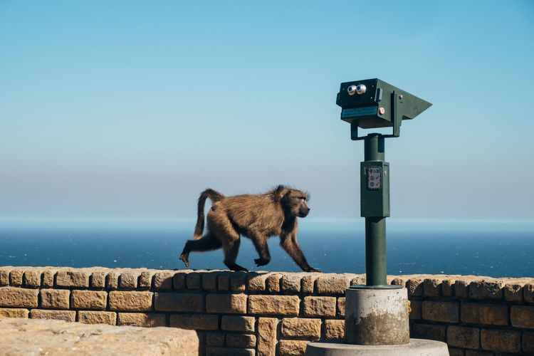 Horse standing on retaining wall by sea against clear sky
