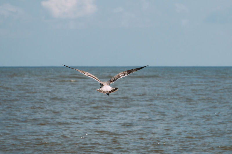 Animal Wildlife Animals In The Wild Sea Spread Wings Flying Animal One Animal Water Animal Themes Sky Bird Horizon Horizon Over Water Waterfront Nature Beauty In Nature No People Outdoors Mexico Beach Ocean