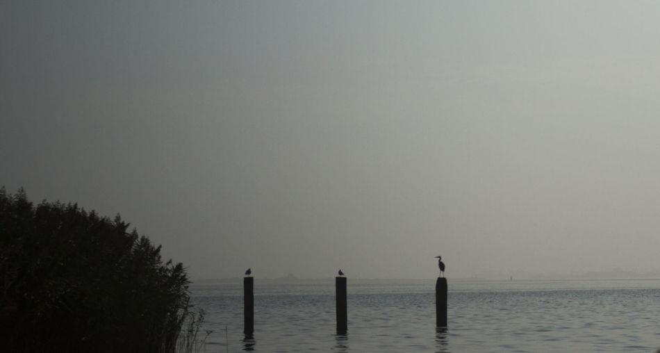 Birds Fog Lauwersmeer Nature No People Outdoors Sea Water EyeEmNewHere