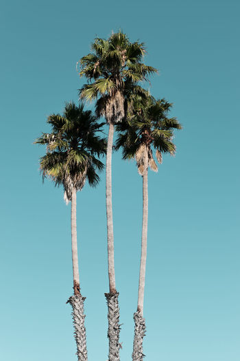 Captured during last year's road trip through the western part of the U.S. 🇺🇸 #santacruz California California Coast California Dreaming Palm Palms SoCal Blue Sky Californialove Roadtrip