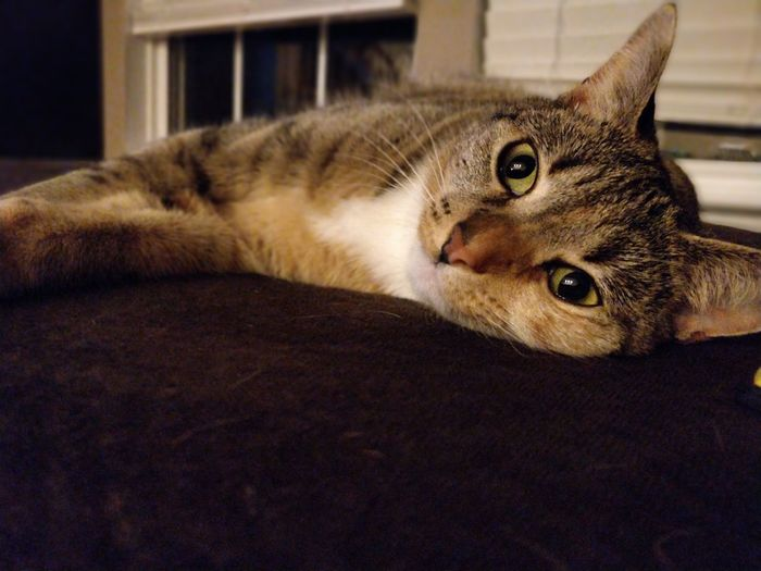 EyeEm Selects Pets Domestic Cat Feline Lying Down Whisker Close-up Tabby Cat Tabby Stray Animal Domestic Animals