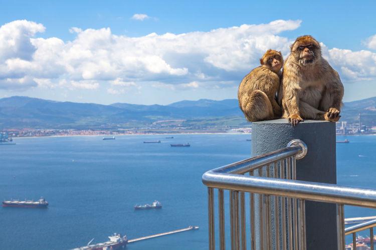 Two monkeys on a railing against sky