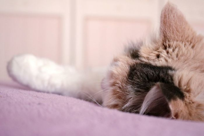 Mycat♥ Blancket Mycat Catlovers Bedroom Bed Catoftheday Cat Lovers Cats Cat♡ Cat Sleep Sleeping Sleeping Cat Sleeping Cats