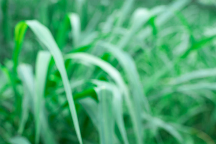 Abstract Backgrounds Agriculture Backgrounds Beauty In Nature Blade Of Grass Close-up Extreme Close-up Food Food And Drink Freshness Full Frame Grass Green Color Growth Leaf Nature No People Outdoors Plant Plant Part Selective Focus Tranquility