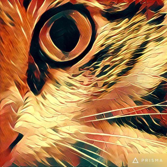 Prisma Prisma_Filter Animal Eye Cat Cute Pets I❤️Cat I❤️cats Cats 🐱 Cat♡ Cute Cats Cat Lovers I ❤️ Cats Our Best Pics EyeEm Animal Lover IPhoneography Cats Of EyeEm Eyeem Best Shots - Animals EyeEm Gallery Beautiful Animals  EyeEm Best Shots Arabian Mau