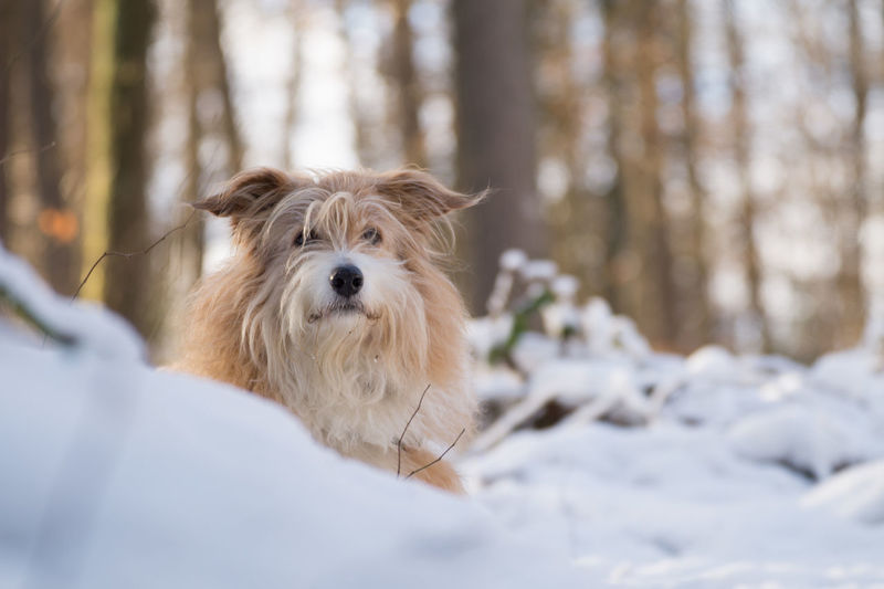 Winter Animal Themes Cold Cold Temperature Day Dog Domestic Animals Forest Looking At Camera Mammal Nature No People One Animal Outdoors Pet Pets Portrait Snow Winter Wood - Material