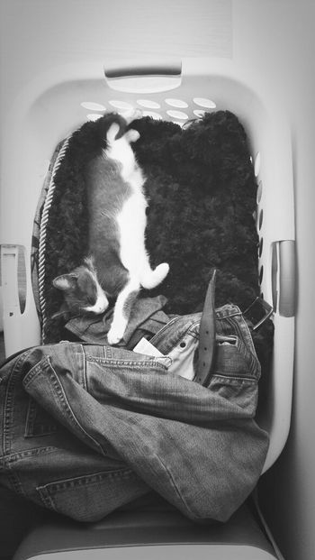 Relaxing B&w KiMartinez Photography Kitty