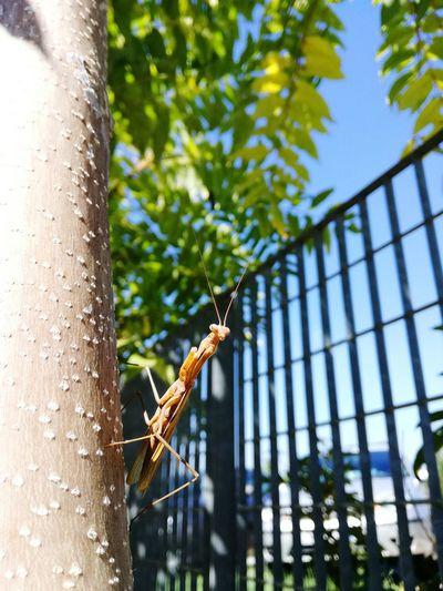 Low angle close-up of mantis climbing up tree