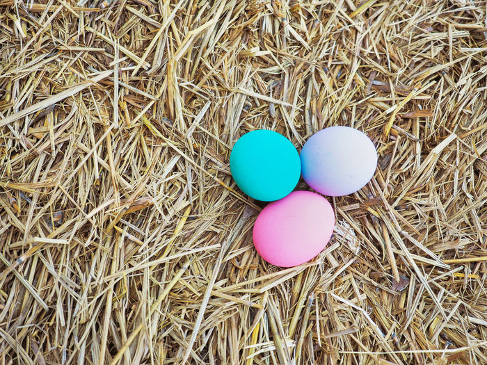 Colorful eggs on the hey for hunting game on Easter day. Easter Day Easter Eggs Kids Close-up Colorful Day Decoration Egg Game Hay High Angle View Hunt No People Outdoors