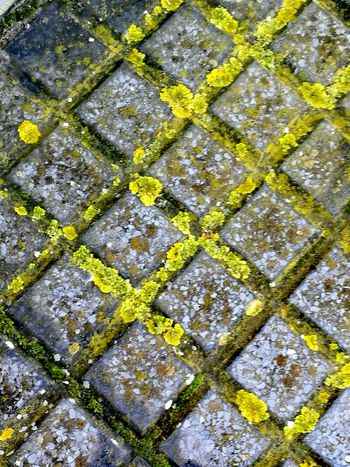Backgrounds Stone Tile Full Frame Textured  Yellow Pattern Seamless Pattern Moss Street Close-up