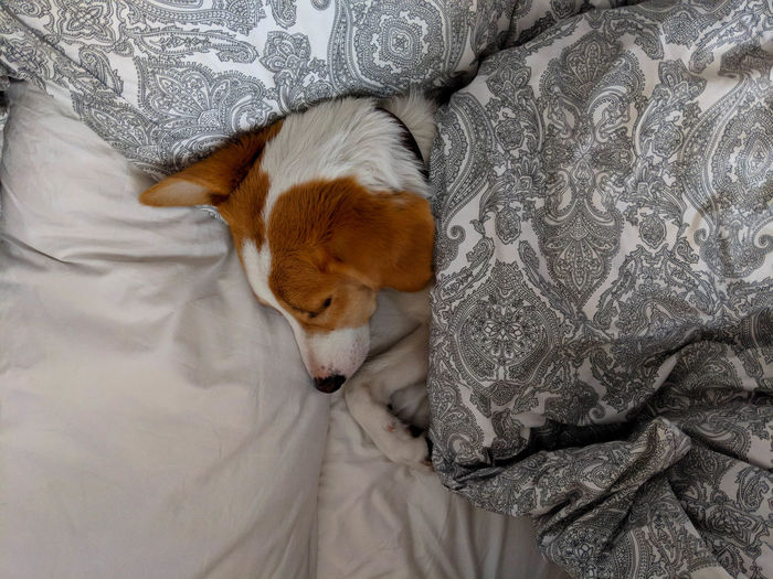 high angle view of dog sleeping on bed Animal Animal Head  Animal Themes Bed Canine Dog Domestic Domestic Animals Duvet Eyes Closed  Floral Pattern Furniture High Angle View Indoors  Mammal No People One Animal Pets Relaxation Resting Sleeping Textile Vertebrate