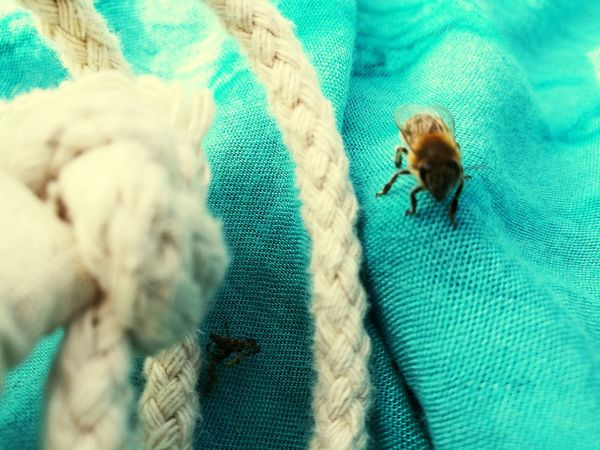Animal Themes Textile No People Day Animal Outdoor Clothing First Eyeem Photo