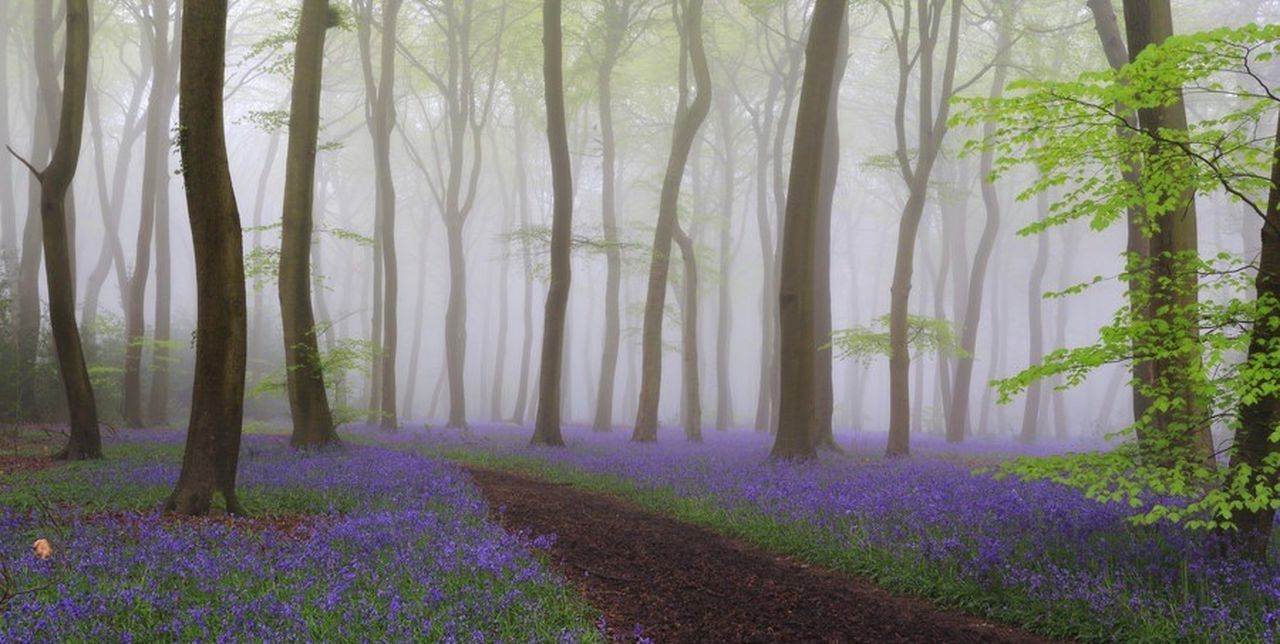Spring bluebell woods Forest Landscape Beauty In Nature Tree
