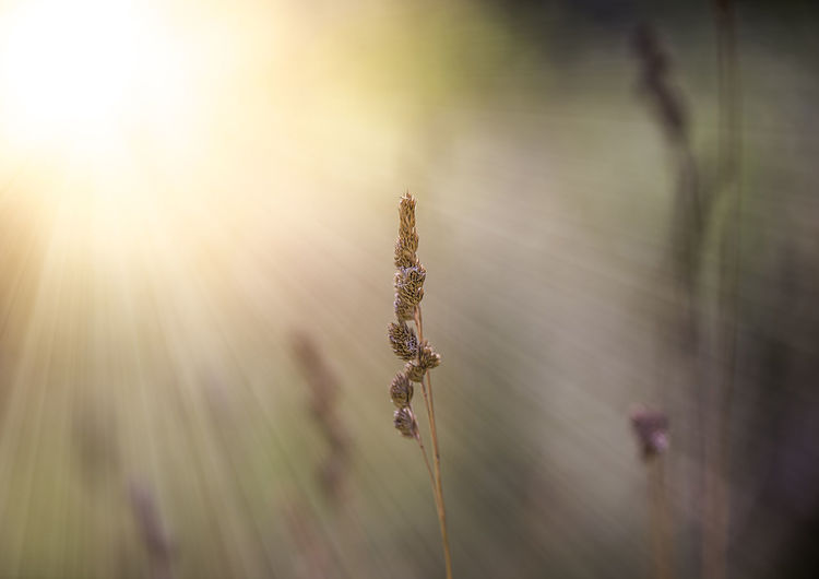 Beauty In Nature Close-up Day Growth Lens Flare Nature Plant Plant Stem Sunlight
