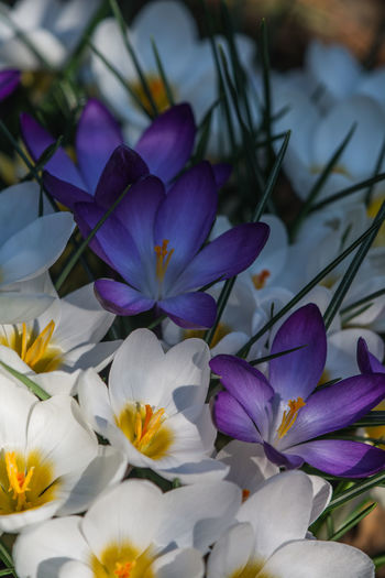 Close-up No People Spring Garden Plant Freshness Colors Seasons Life Fresh Tranquil Scene Macro Nature Flowers Growth