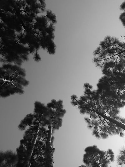 Hey look up on us Low angle view sky Dramatic Angles Environment Low Angle View Sky Forest Photography Black And White Black Beauty EyeEm Selects Perspectives On Nature Rethink Things Black And White Friday Go Higher