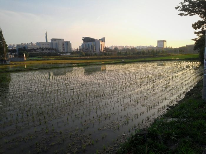 가슴이 시원해지는 넓은 공간♥ Large Ground Wide Angle Wide Open Cooling  Field Rice Field