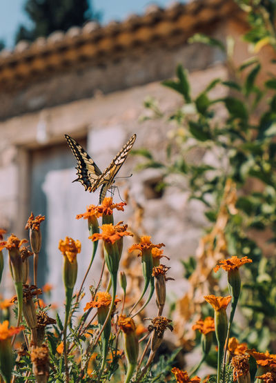 Close-up of butterfly pollinating on flowering plant