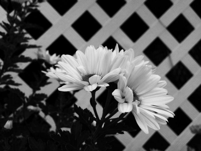 White Flower Fence Garden Nature On Your Doorstep