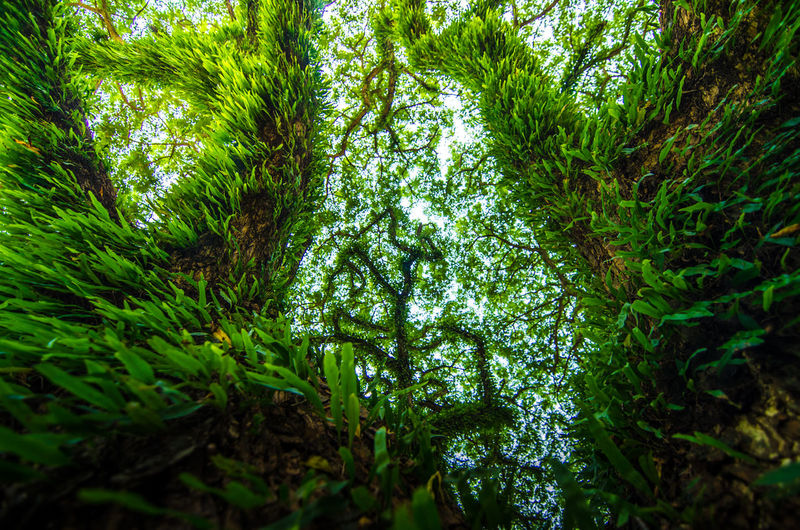 Avatar tree Avatar Green Green Color Rainforests Beauty In Nature Cover Environment Foliage Forest Green Color Green Foliage Green Plant Growth Jungle Leaf Low Angle View Lush Foliage Nature Parasite Plant Plant Part Rainforest Tree Tree Trunk Trunk Under Trees